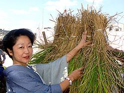 銀座の屋上での農作業している時に取材